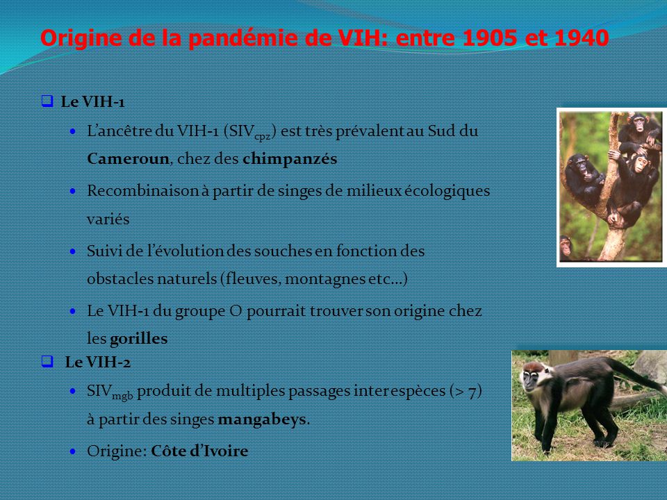 Origine de la pandémie de VIH: entre 1905 et 1940