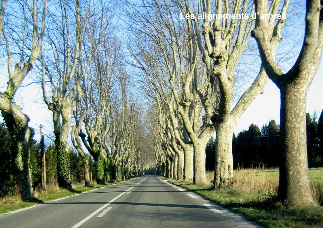 Les alignements d'arbres