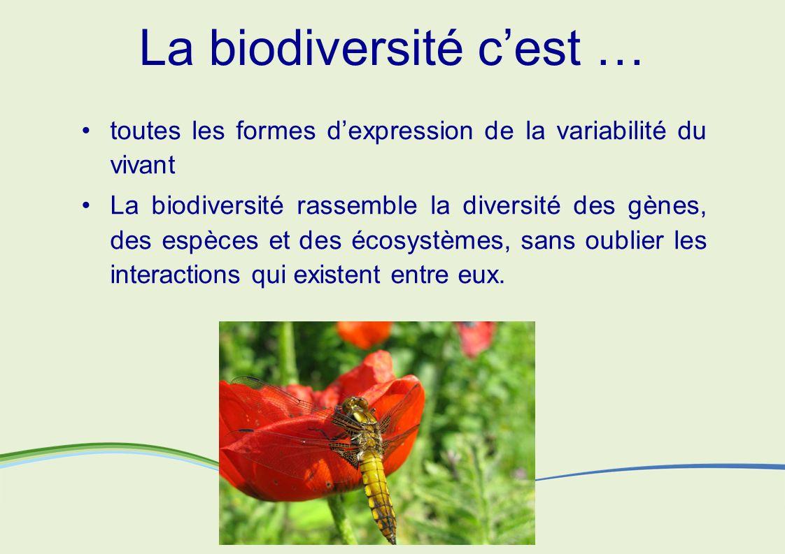 La biodiversité c'est …