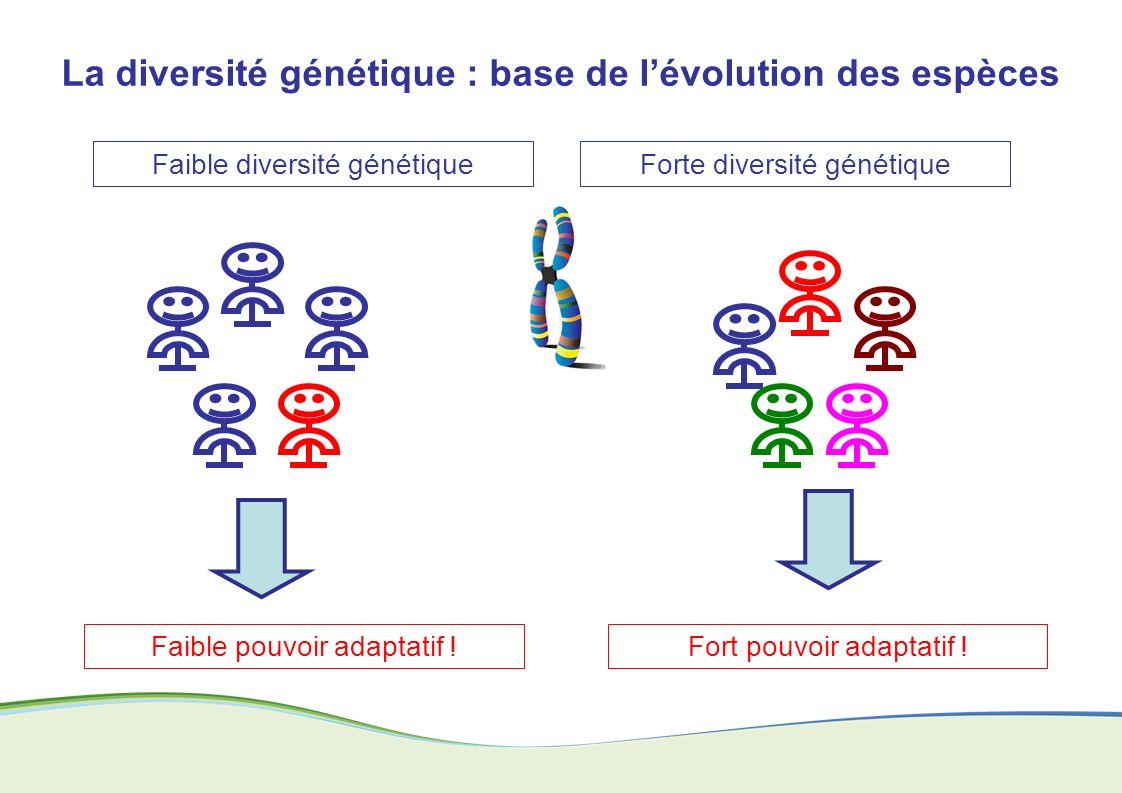 La diversité génétique : base de l'évolution des espèces
