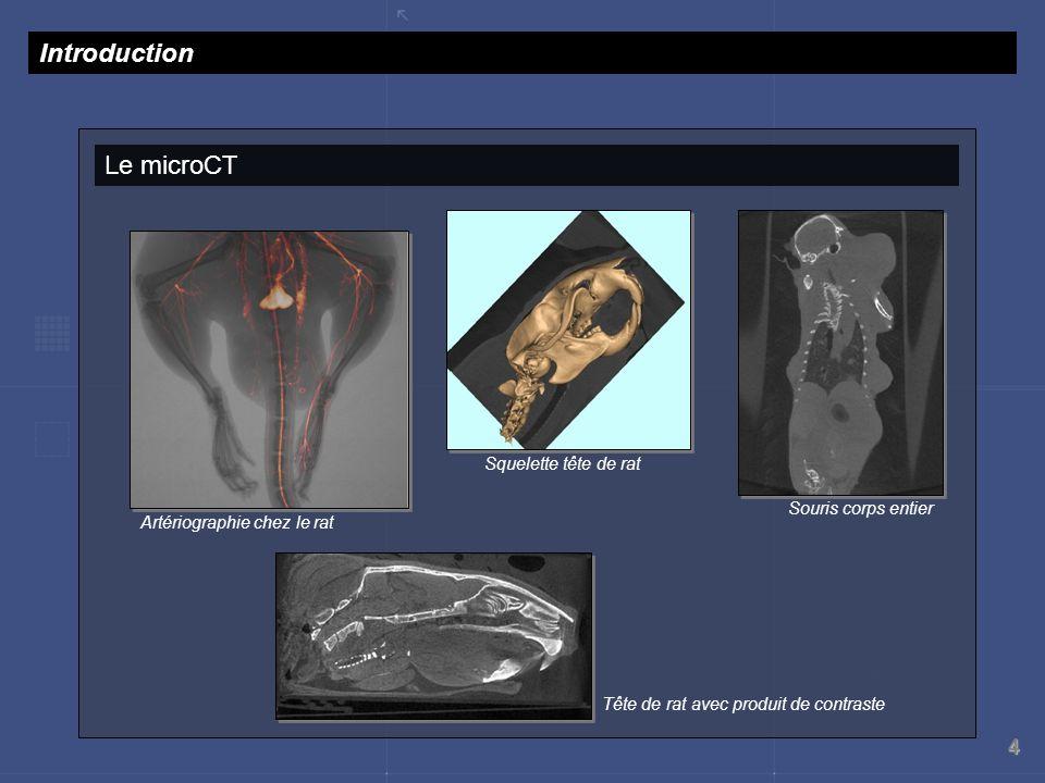 Introduction Le microCT Squelette tête de rat Souris corps entier