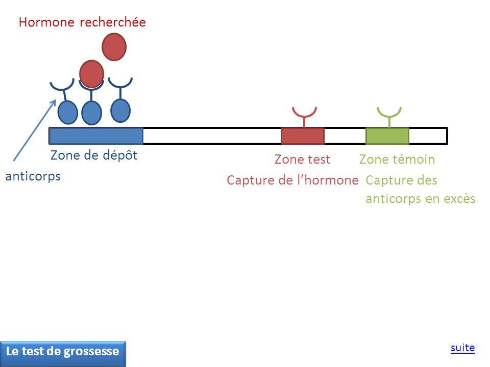 Capture des anticorps en excès