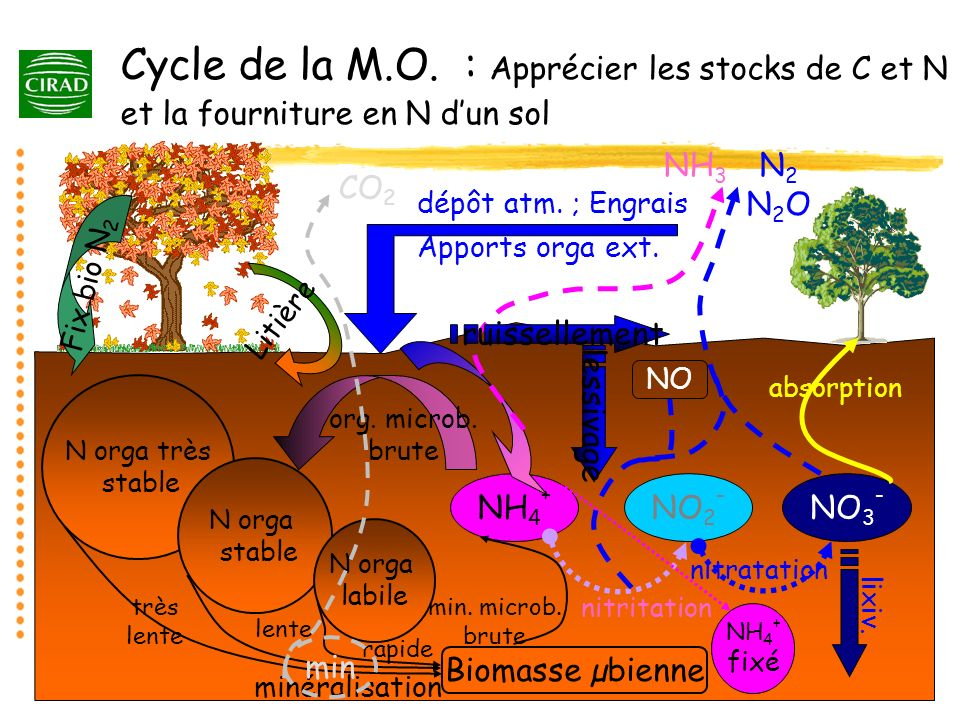 Cycle de la M.O. : Apprécier les stocks de C et N et la fourniture en N d'un sol
