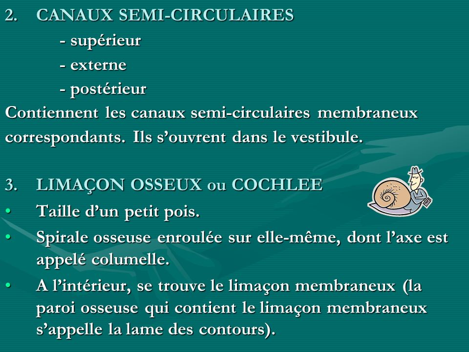 CANAUX SEMI-CIRCULAIRES