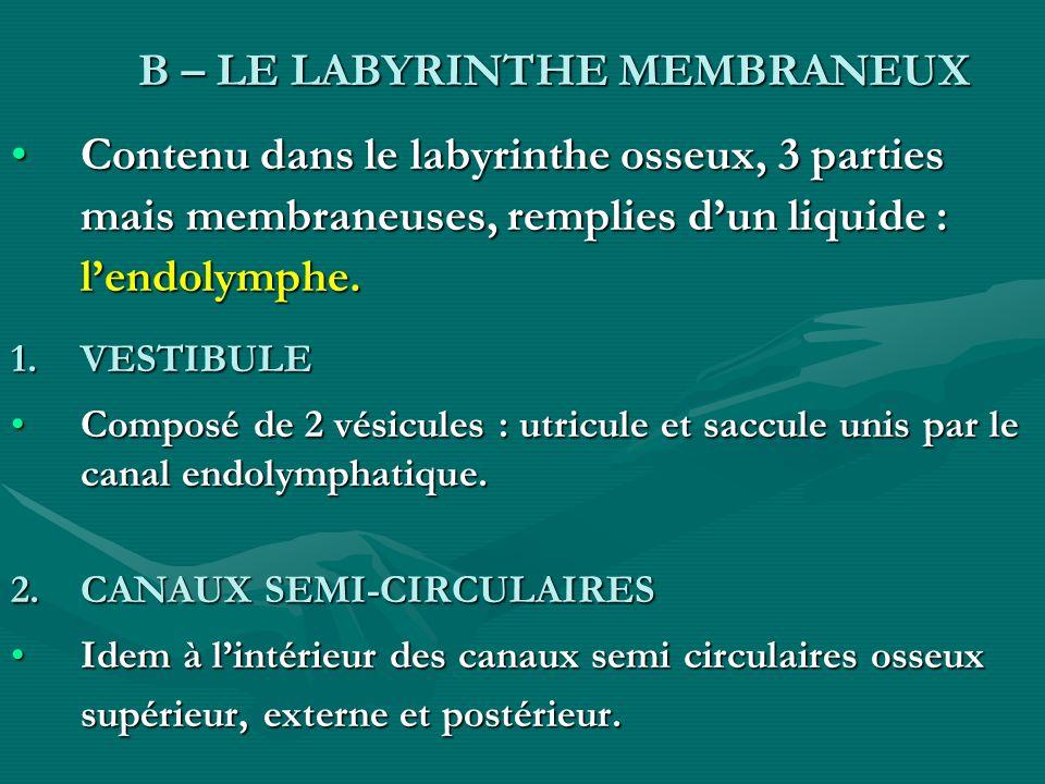 B – LE LABYRINTHE MEMBRANEUX