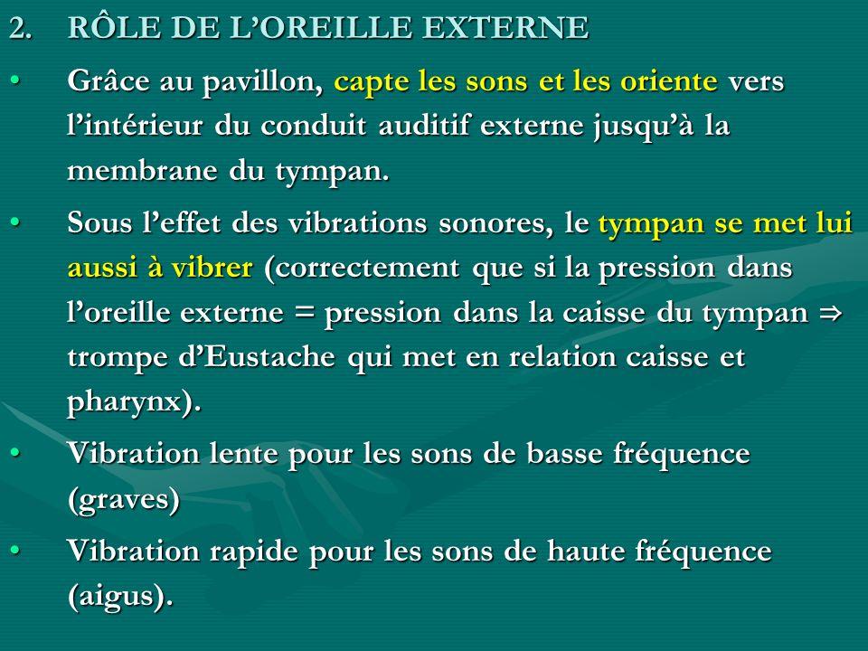 RÔLE DE L'OREILLE EXTERNE