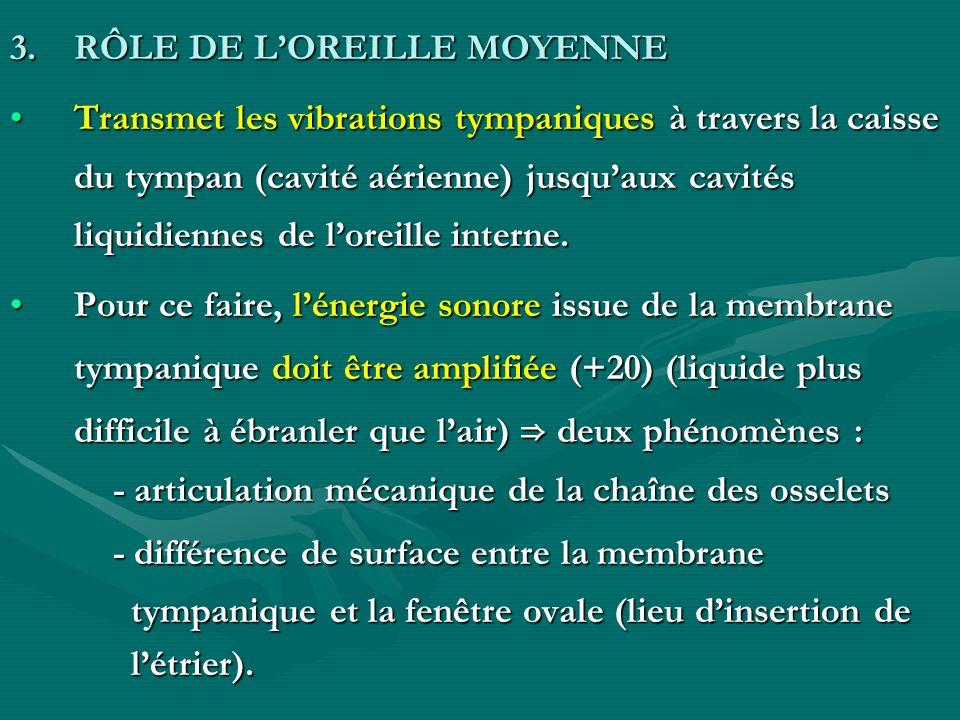 RÔLE DE L'OREILLE MOYENNE