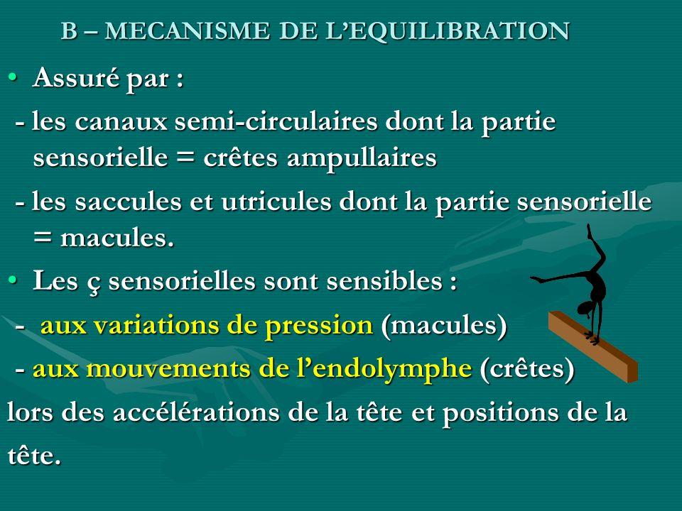 - les saccules et utricules dont la partie sensorielle = macules.
