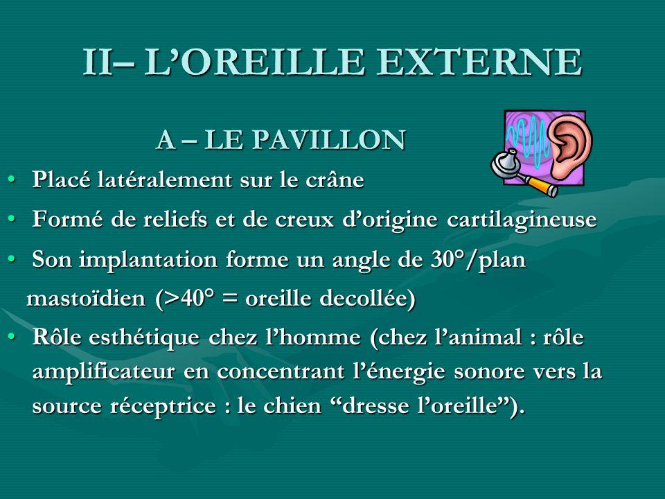 II– L'OREILLE EXTERNE A – LE PAVILLON Placé latéralement sur le crâne