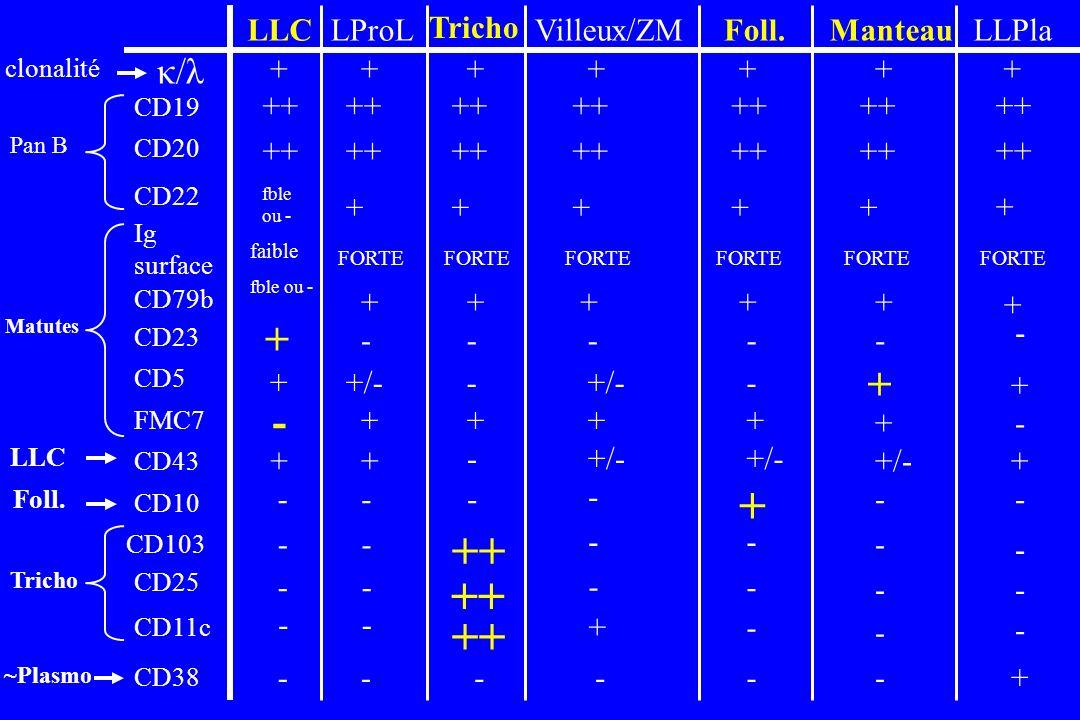 + ++ + + - κ/λ LLC LProL Tricho Villeux/ZM Foll. Manteau LLPla ++ + -