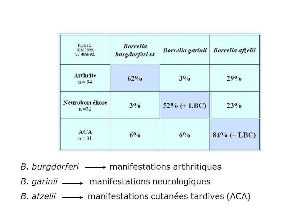B. burgdorferi manifestations arthritiques