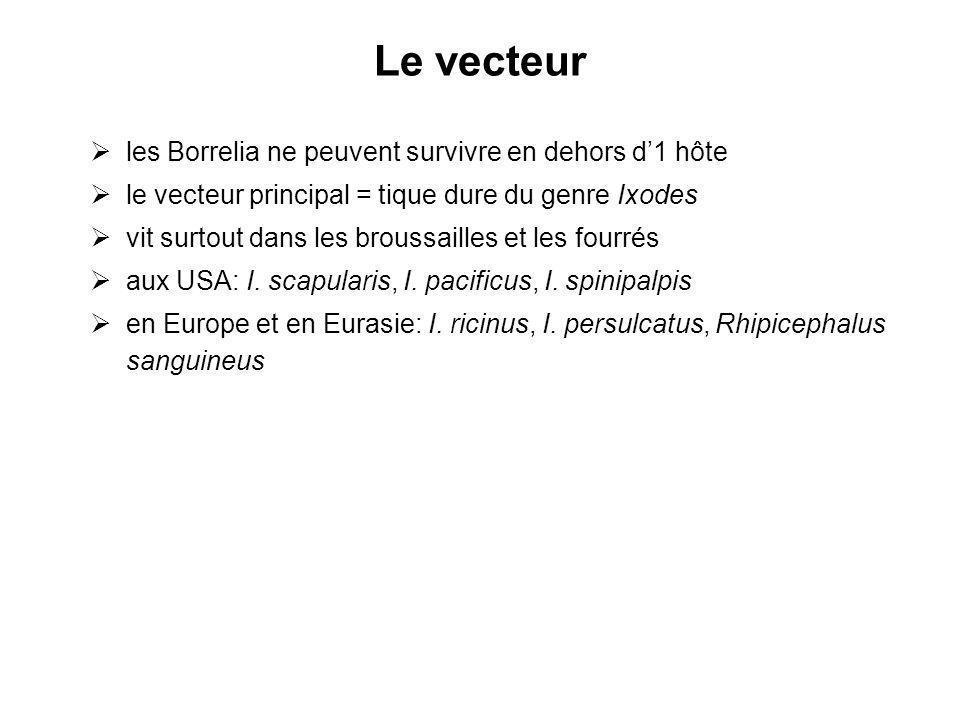 Le vecteur les Borrelia ne peuvent survivre en dehors d'1 hôte