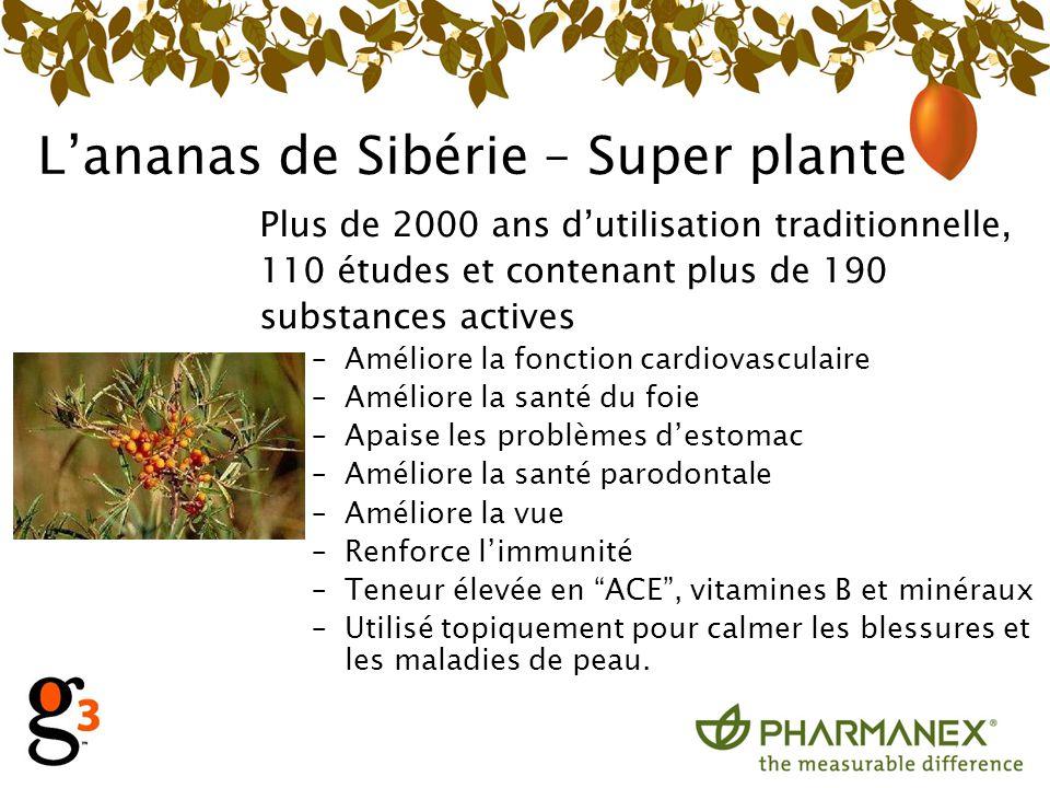 L'ananas de Sibérie – Super plante