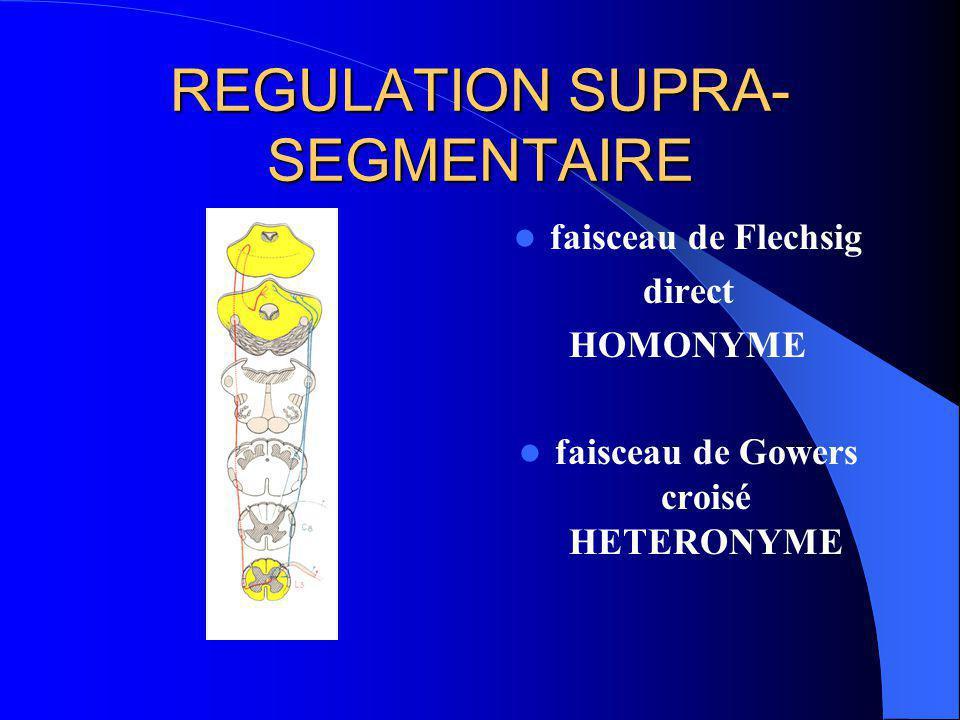 REGULATION SUPRA-SEGMENTAIRE