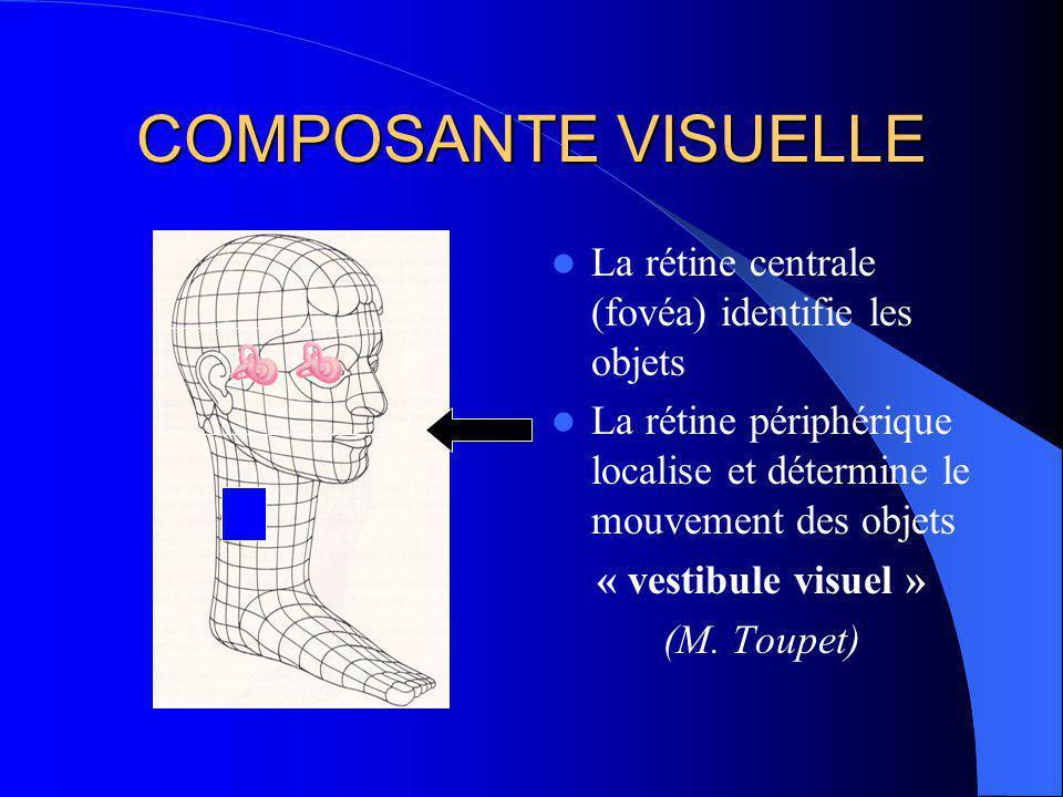 COMPOSANTE VISUELLE La rétine centrale (fovéa) identifie les objets