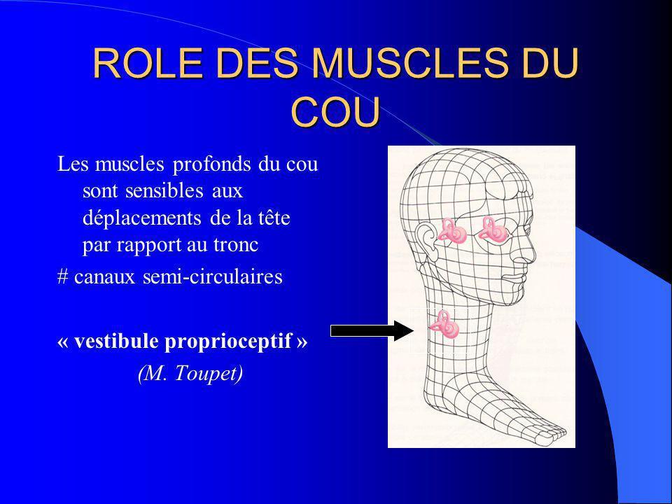 ROLE DES MUSCLES DU COU Les muscles profonds du cou sont sensibles aux déplacements de la tête par rapport au tronc.