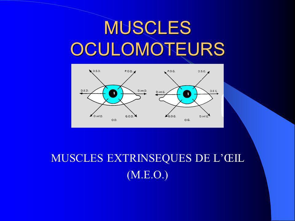 MUSCLES EXTRINSEQUES DE L'ŒIL