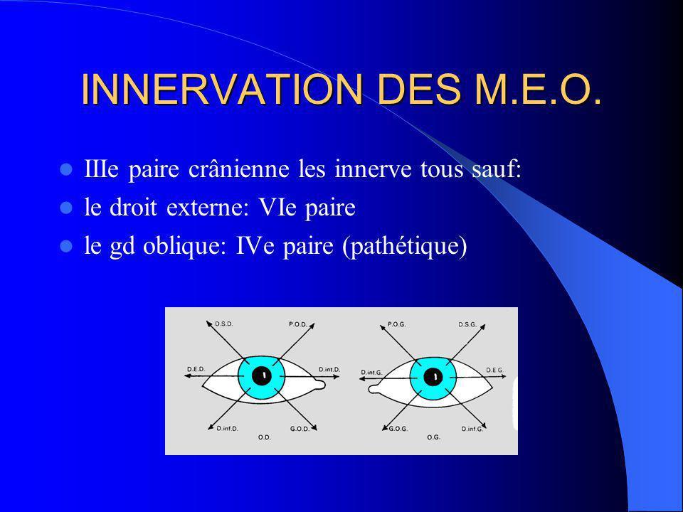 INNERVATION DES M.E.O. IIIe paire crânienne les innerve tous sauf: