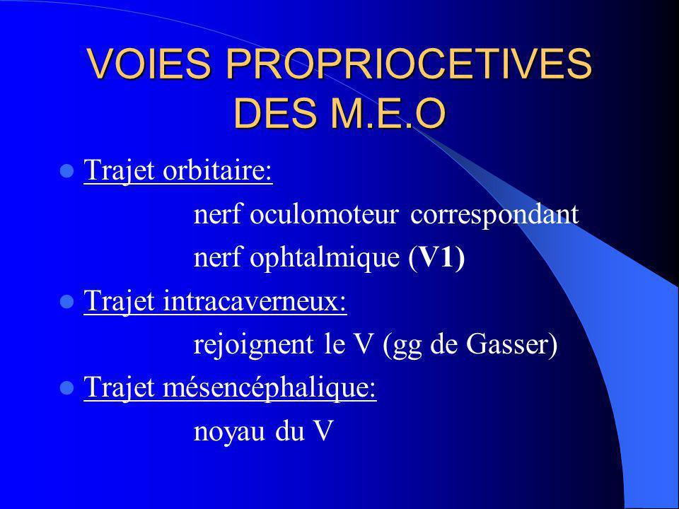 VOIES PROPRIOCETIVES DES M.E.O
