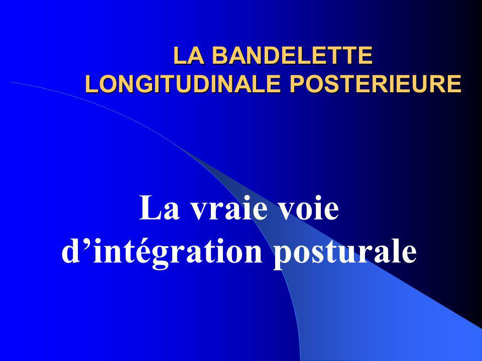 LA BANDELETTE LONGITUDINALE POSTERIEURE