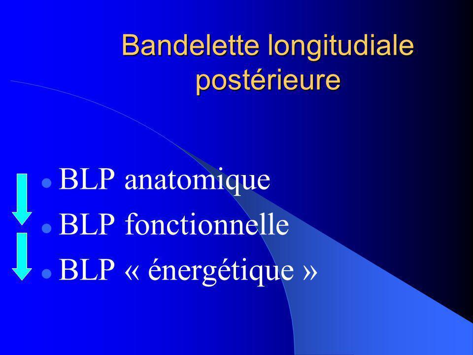 Bandelette longitudiale postérieure