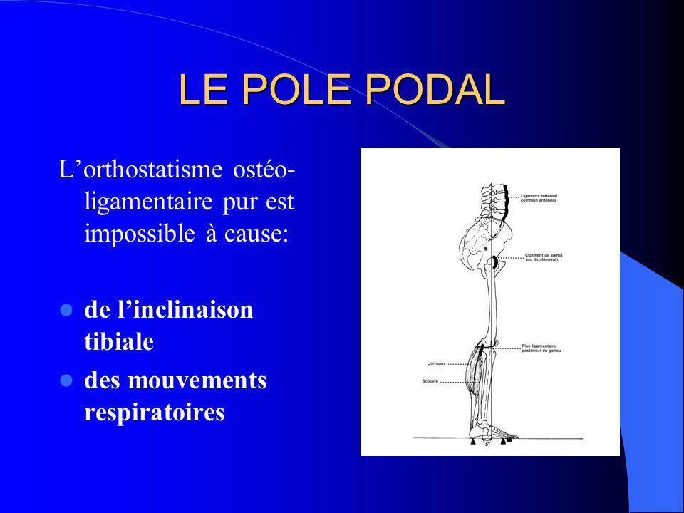 LE POLE PODAL L'orthostatisme ostéo-ligamentaire pur est impossible à cause: de l'inclinaison tibiale.