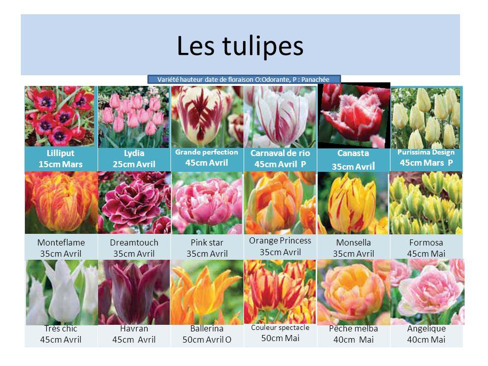 Variété hauteur date de floraison O:Odorante, P : Panachée