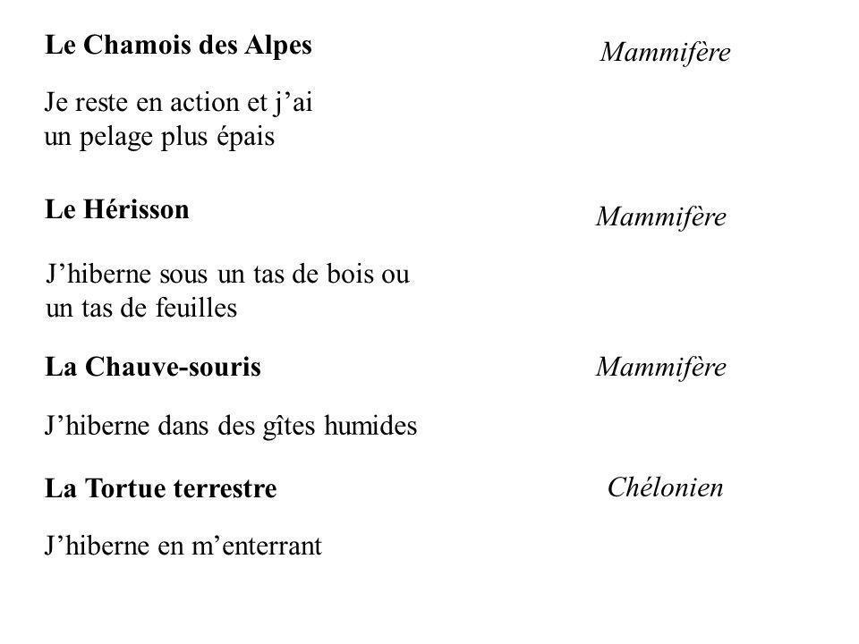Le Chamois des Alpes Mammifère. Je reste en action et j'ai. un pelage plus épais. Le Hérisson. Mammifère.