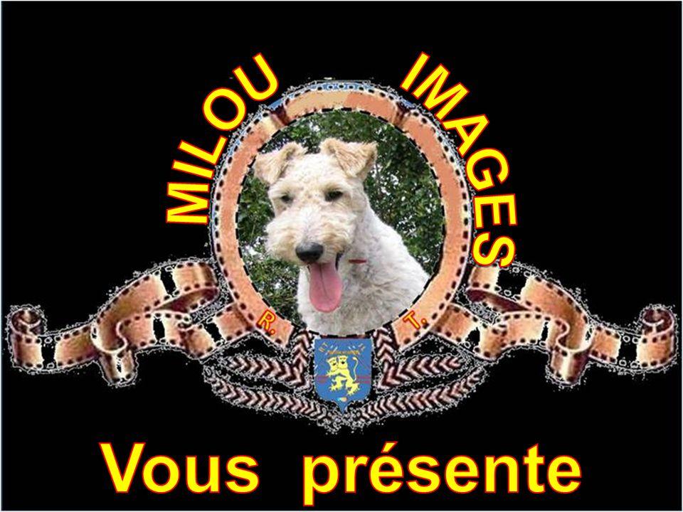 IMAGES MILOU Vous présente