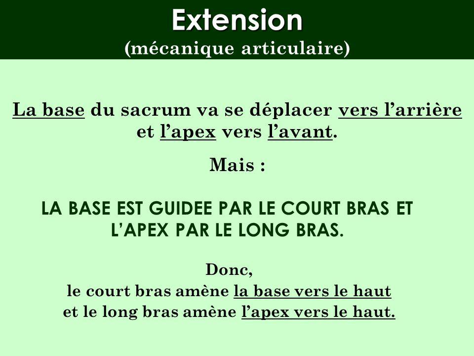 Extension (mécanique articulaire)