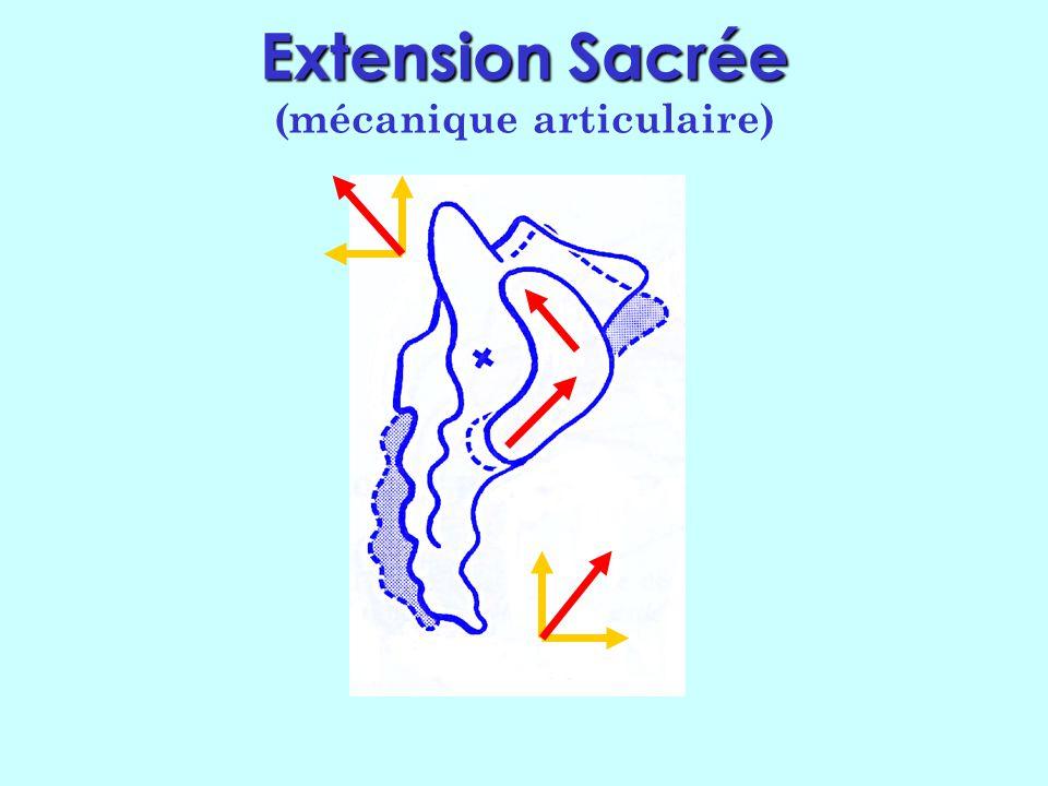 Extension Sacrée (mécanique articulaire)