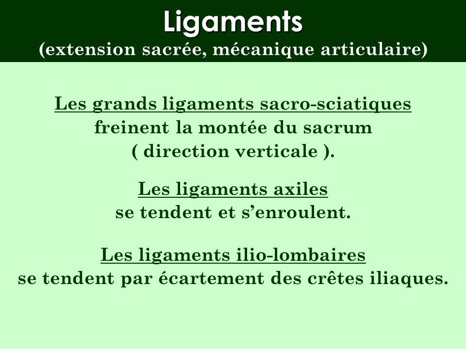 Ligaments (extension sacrée, mécanique articulaire)