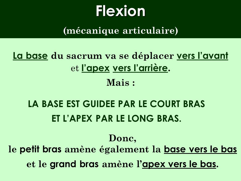 Flexion (mécanique articulaire)