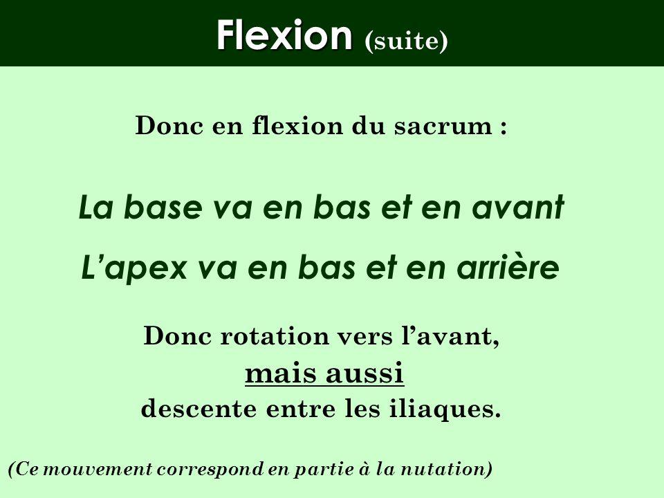 Flexion (suite) La base va en bas et en avant