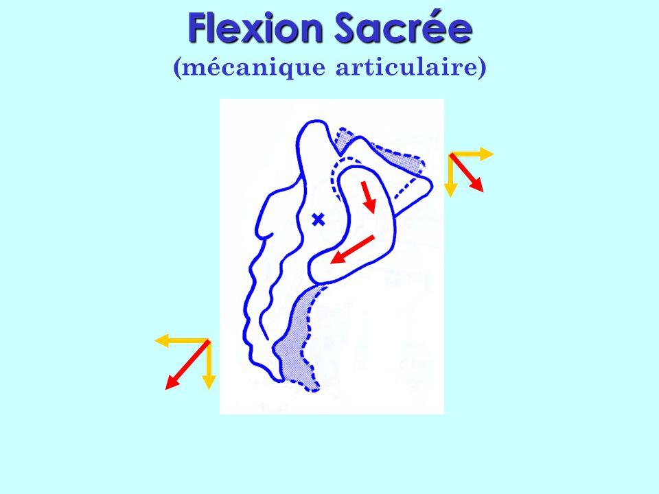 Flexion Sacrée (mécanique articulaire)