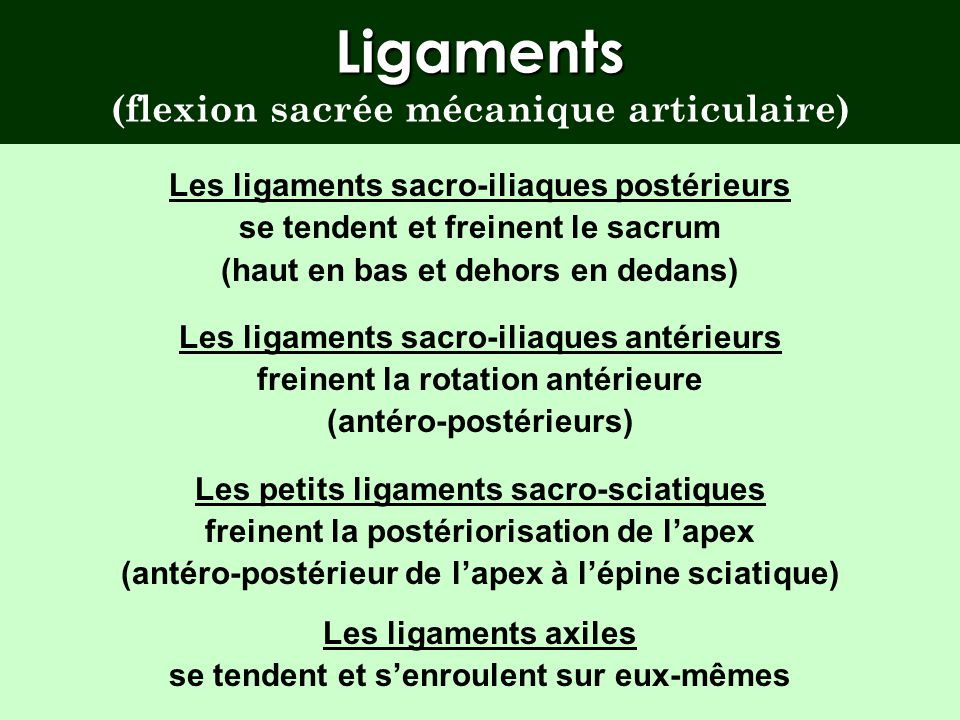 Ligaments (flexion sacrée mécanique articulaire)