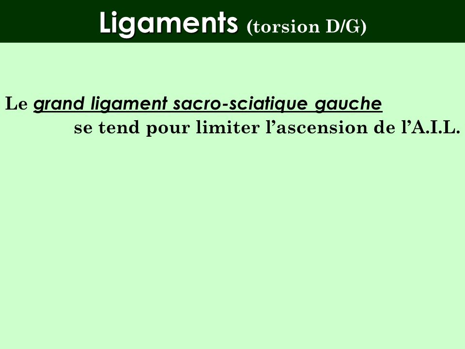 Ligaments (torsion D/G)
