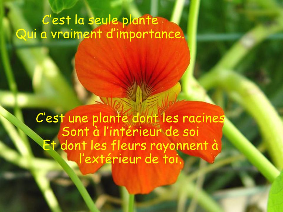 C'est la seule plante Qui a vraiment d'importance.