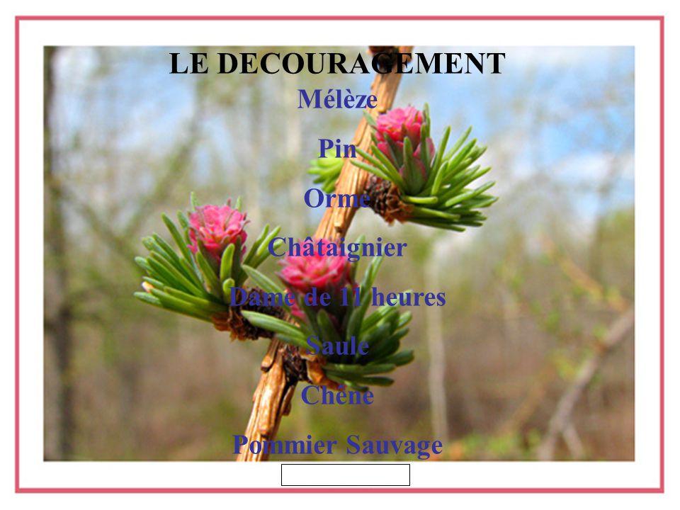 LE DECOURAGEMENT Mélèze Pin Orme Châtaignier Dame de 11 heures Saule