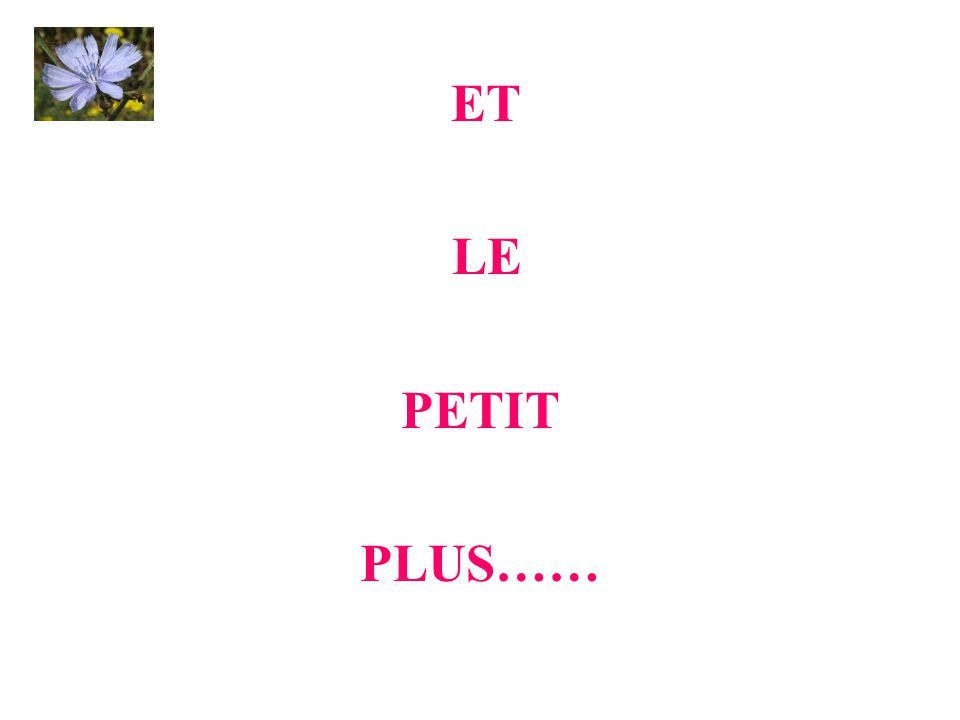 ET LE PETIT PLUS……