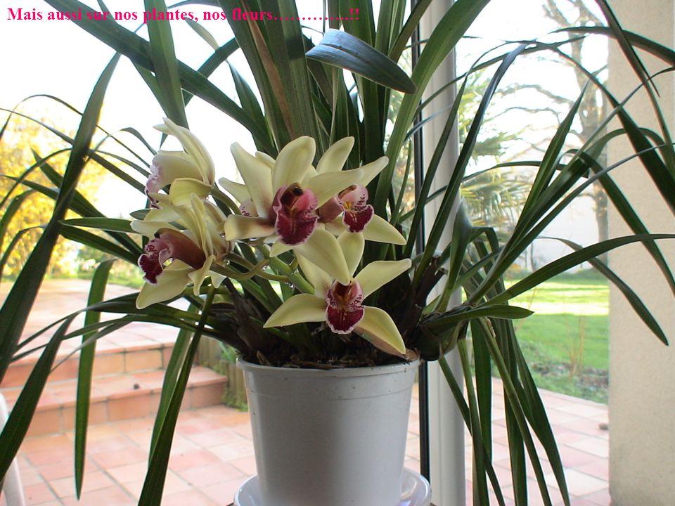 Mais aussi sur nos plantes, nos fleurs…………..!!
