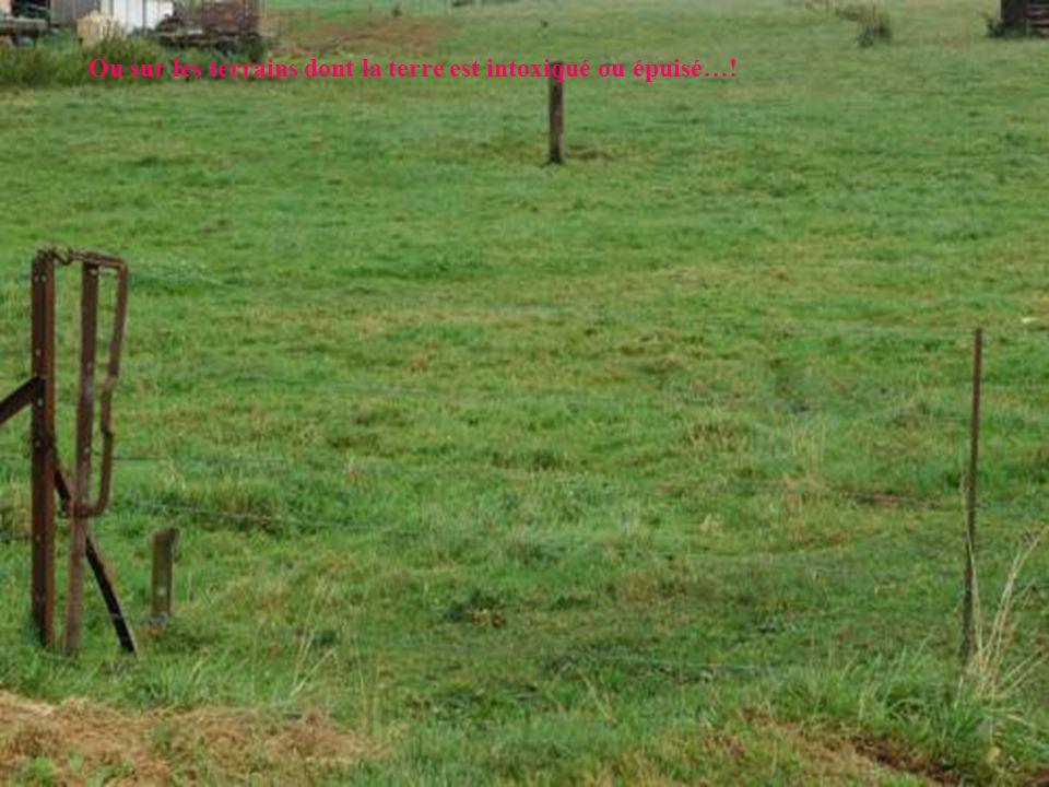 Ou sur les terrains dont la terre est intoxiqué ou épuisé…!