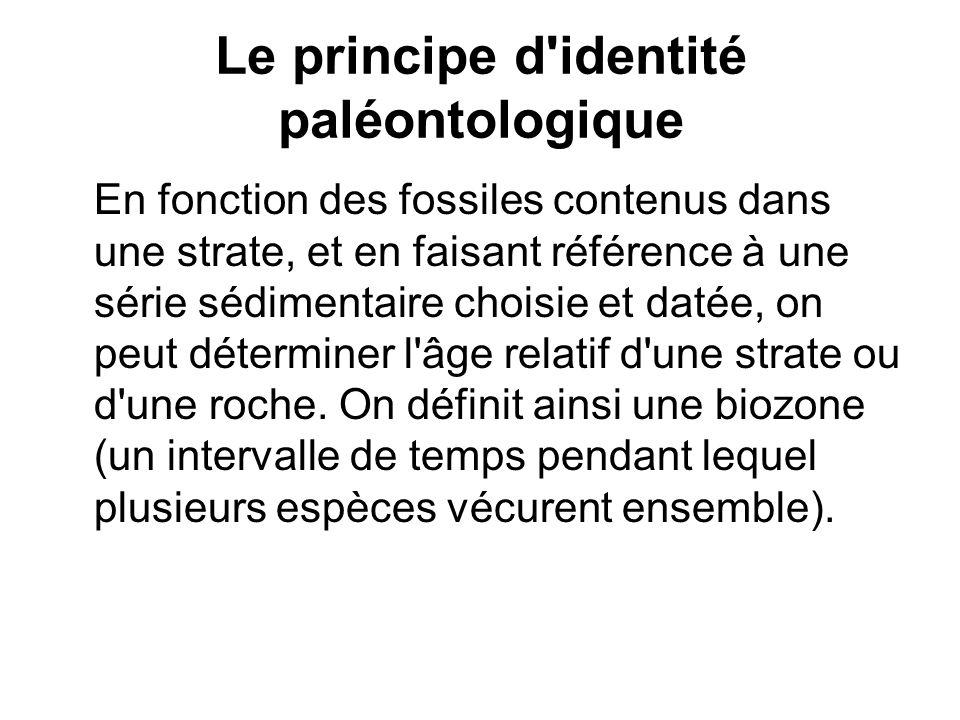 Le principe d identité paléontologique