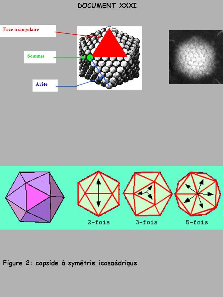Figure 2: capside à symétrie icosaédrique