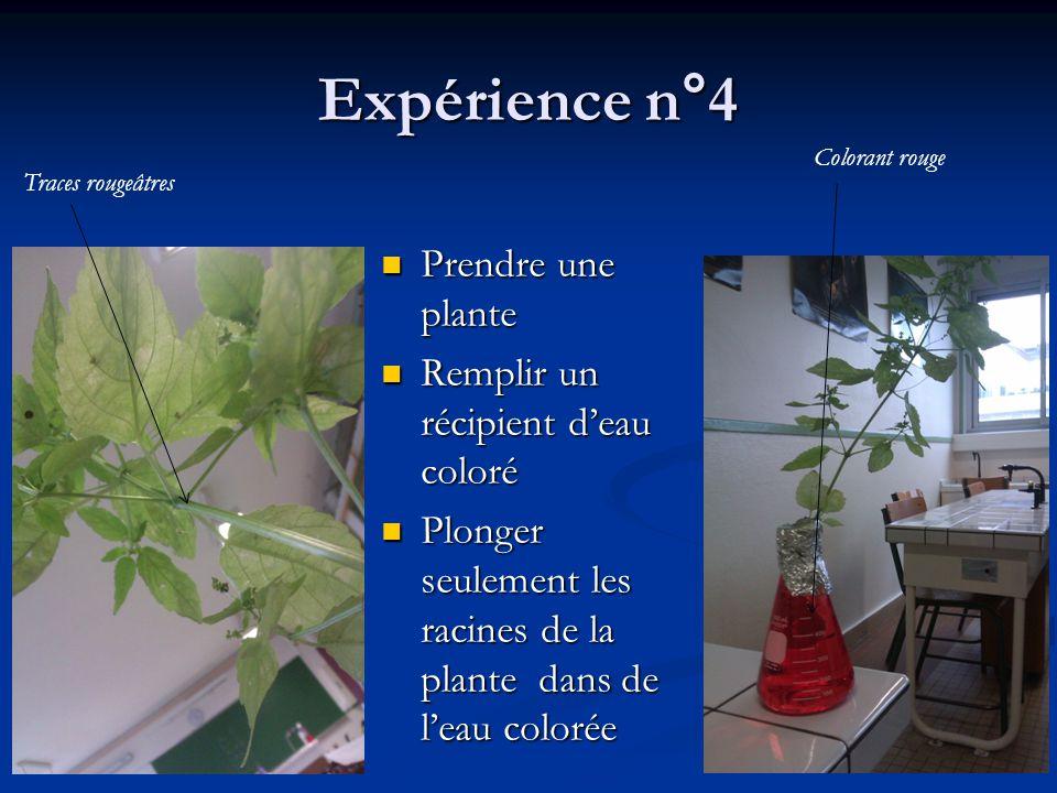 Expérience n°4 Prendre une plante Remplir un récipient d'eau coloré