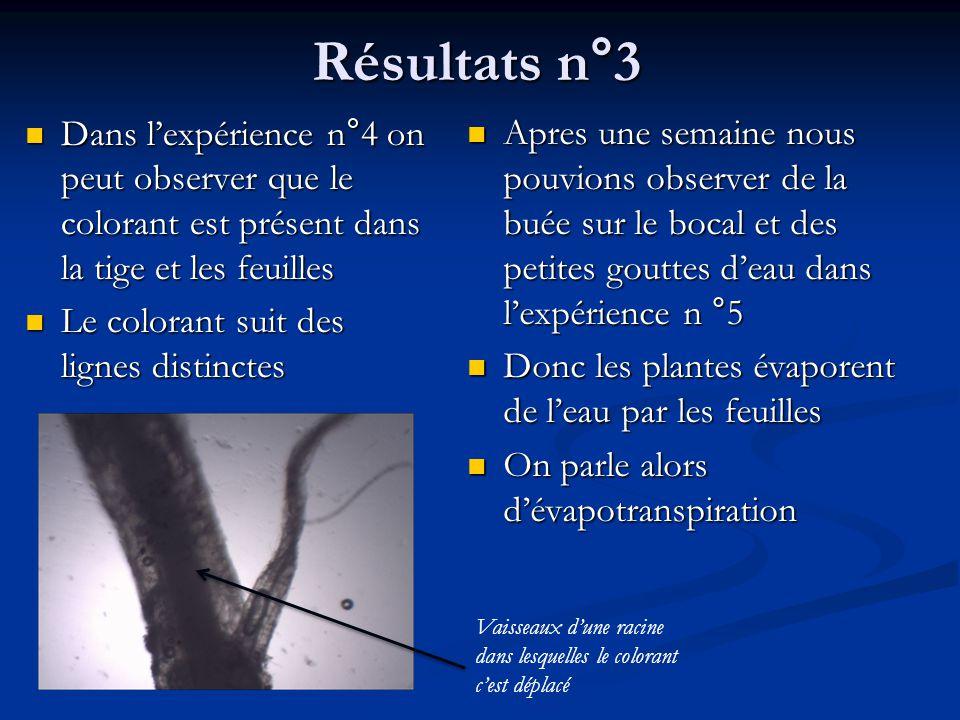 Résultats n°3 Dans l'expérience n°4 on peut observer que le colorant est présent dans la tige et les feuilles.