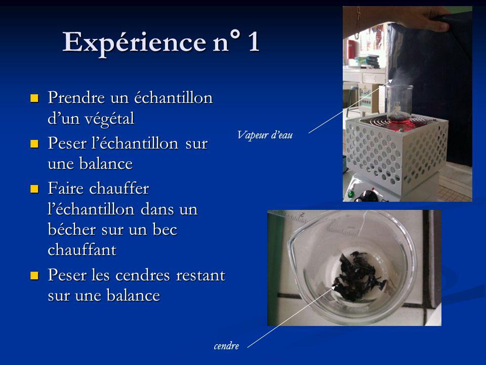 Expérience n° 1 Prendre un échantillon d'un végétal