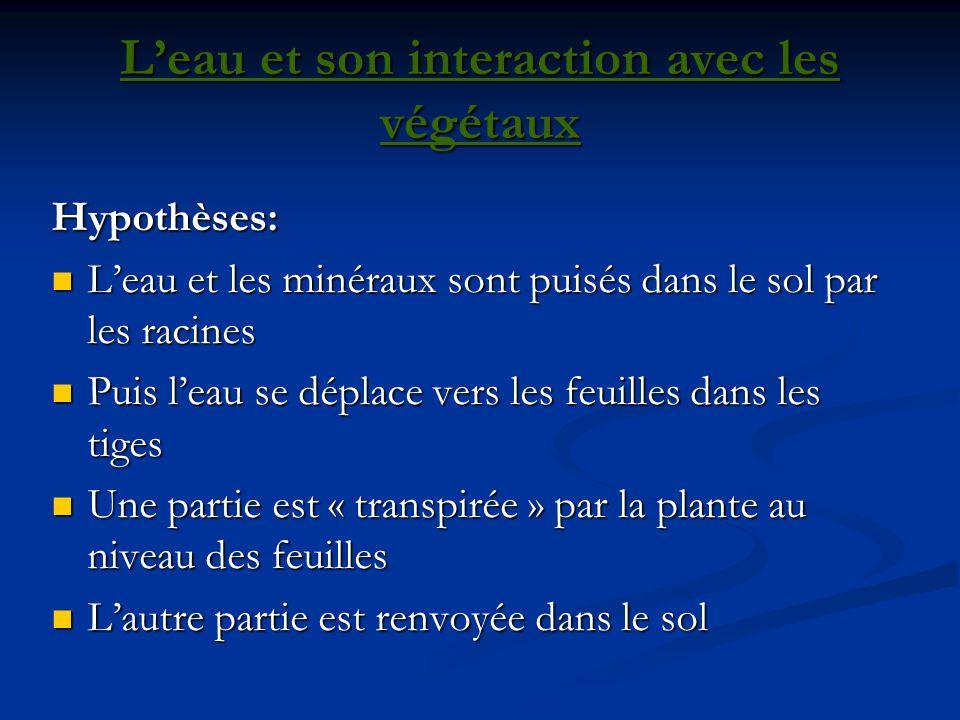 L'eau et son interaction avec les végétaux