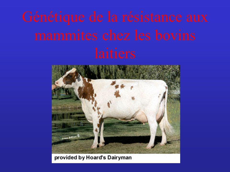 Génétique de la résistance aux mammites chez les bovins laitiers
