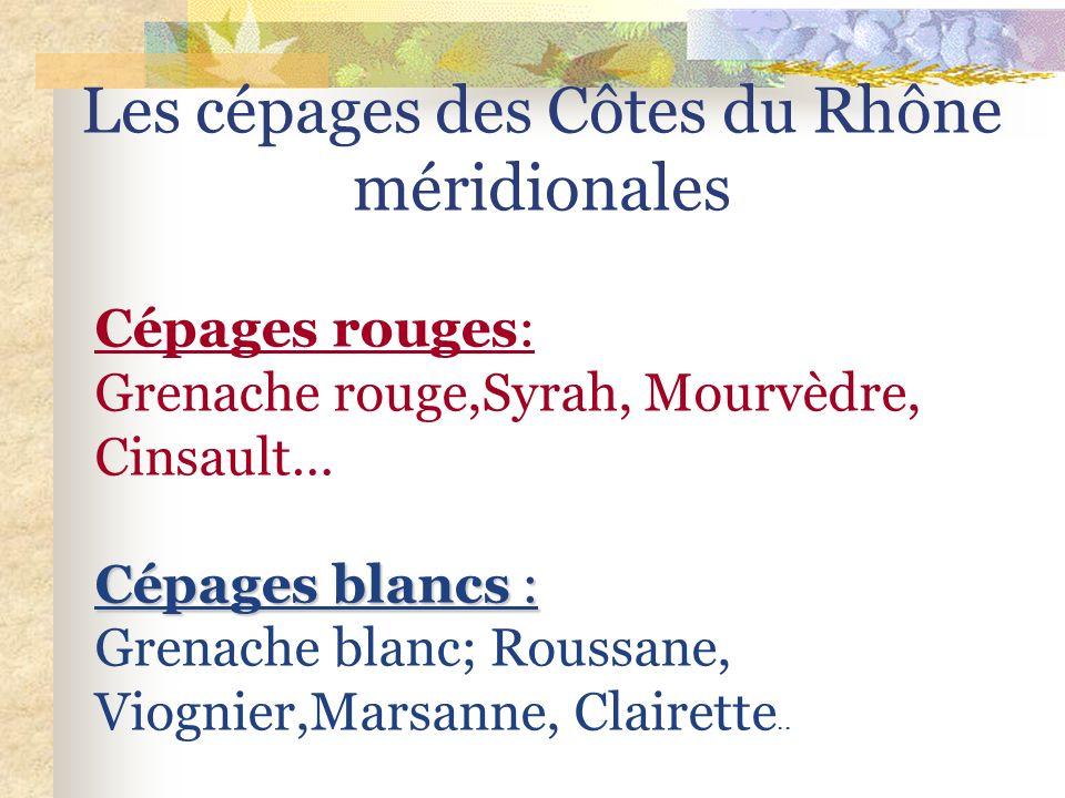 Les cépages des Côtes du Rhône méridionales